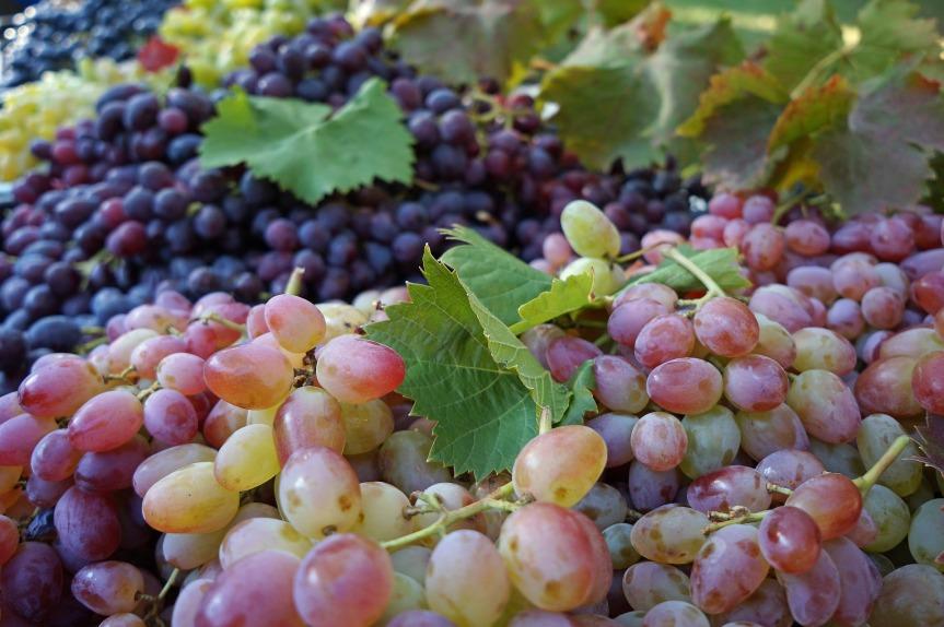 grape-990068_1920