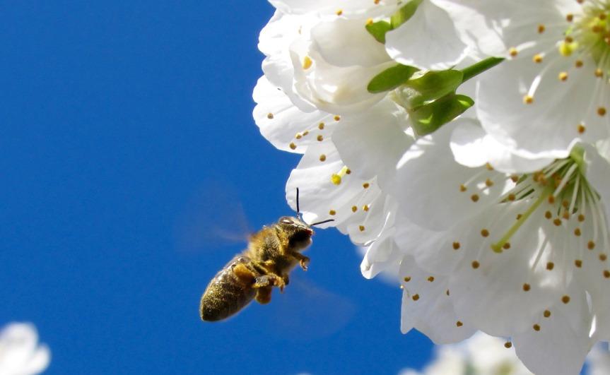 flower-1159012_1280