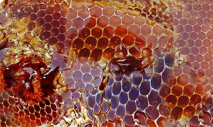 honey-948452_1280